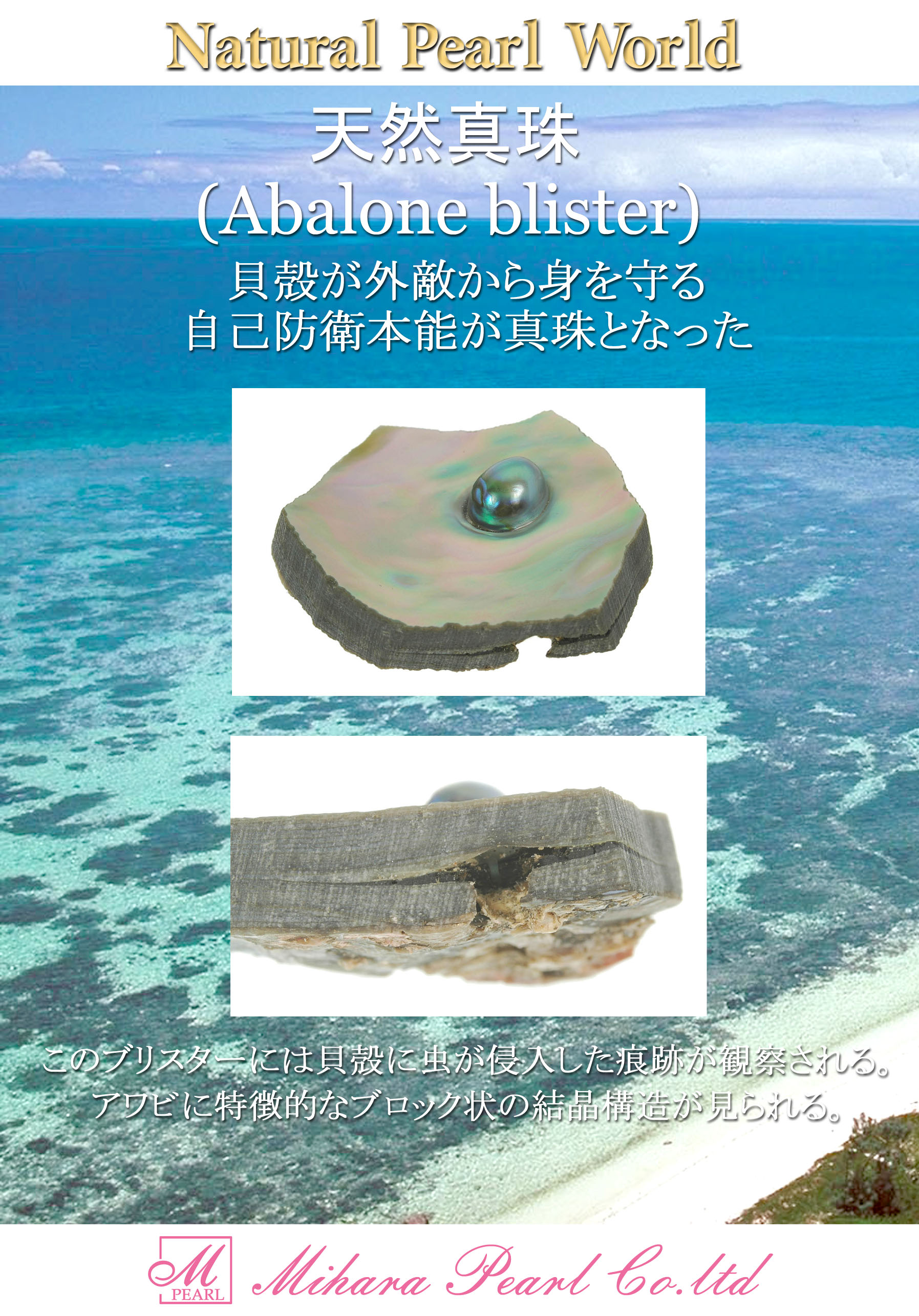 abaloneblister_for_download