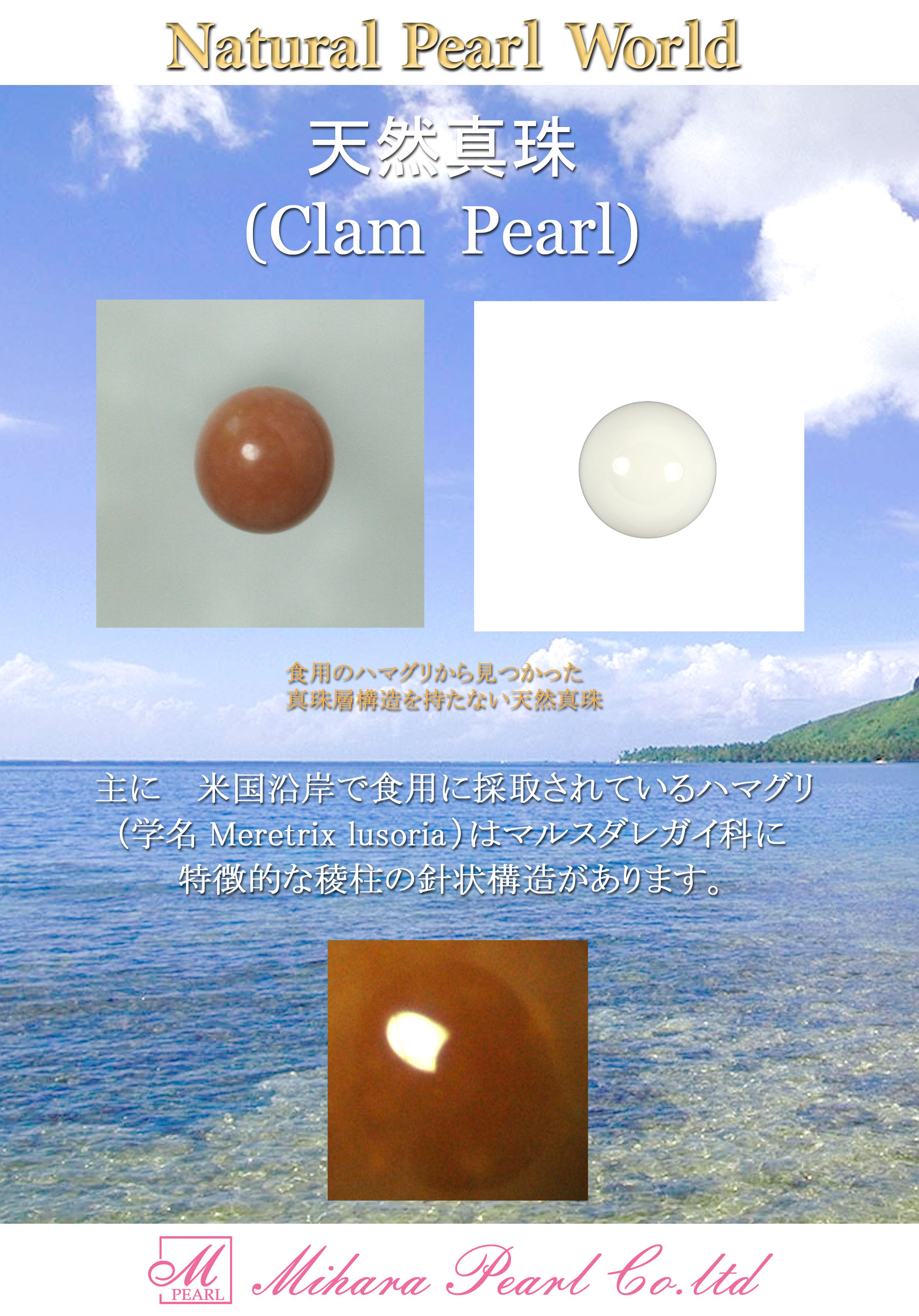 clam_for_download