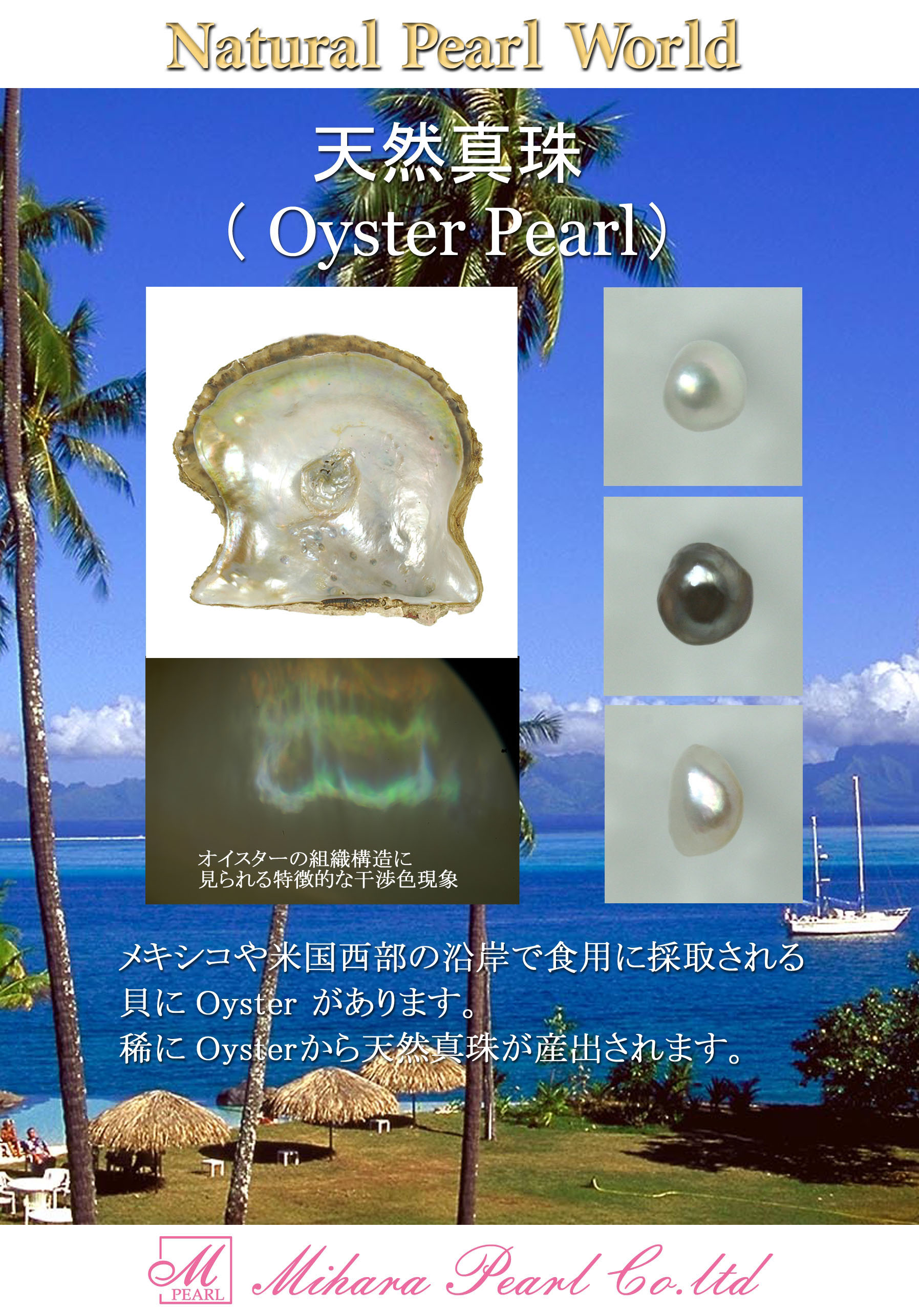 oyster_for_download